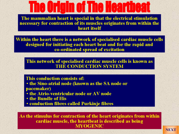 Preview of A2 Biology: Electrical activity of the heart