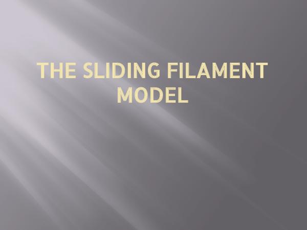 Preview of A2 Biology (OCR)- Sliding Filament Model ppt