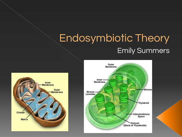 Preview of A2 OCR Biology Endosymbiotic Theory