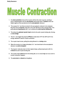 Preview of A2 OCR Biology: Muscle Contraction Sequence