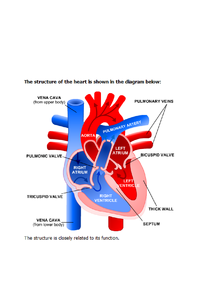 Preview of A labelled diagram of the heart