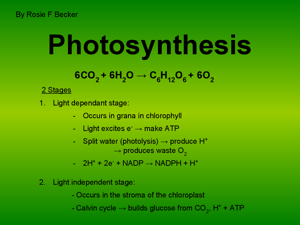 Preview of A Lesson On Photosynthesis