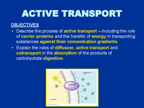 Preview of Active Transport AQA
