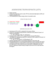 Preview of Adenosine Triphosphate (ATP)