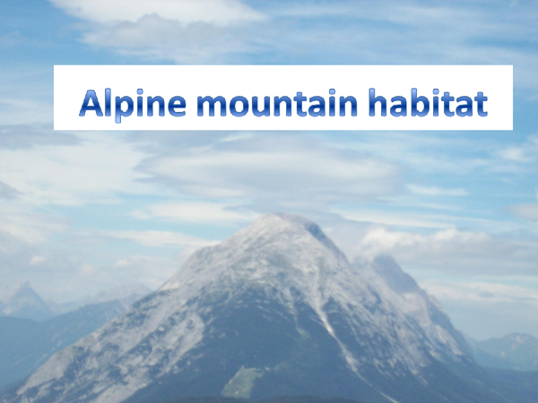 Preview of alpine mountain habitats
