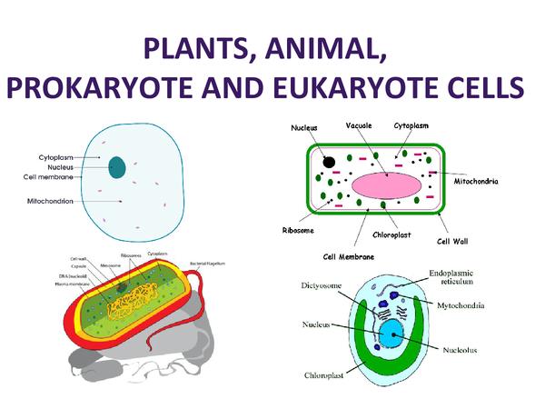 Preview of animal, plant, prokaryotic and Eukaryota cells