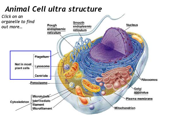 edexcel unit 6 biology coursework