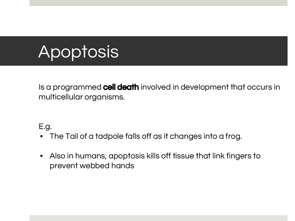 Preview of Apoptosis