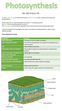 Preview of AQA A2 BIOLOGY UNIT 4: Photosynthesis