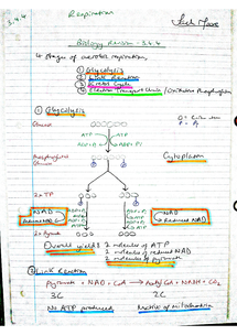 Preview of AQA A2 Biology Revision Notes - Unit 4 Respiration (3.4.4)