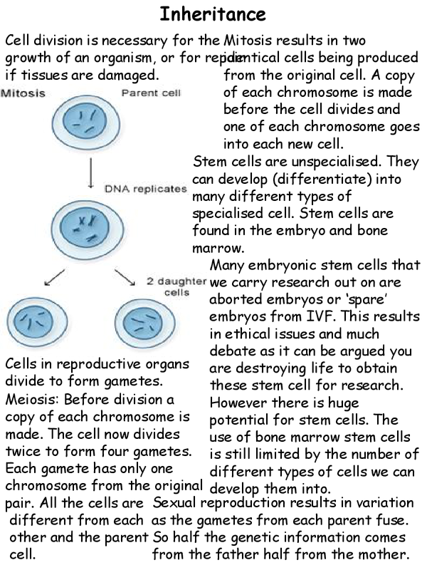 Preview of AQA Additional Biology GCSE Chapter 6 Inheritance