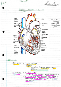Preview of AQA AS Biology Revision Notes - Unit 1 The Heart (3.1.5)