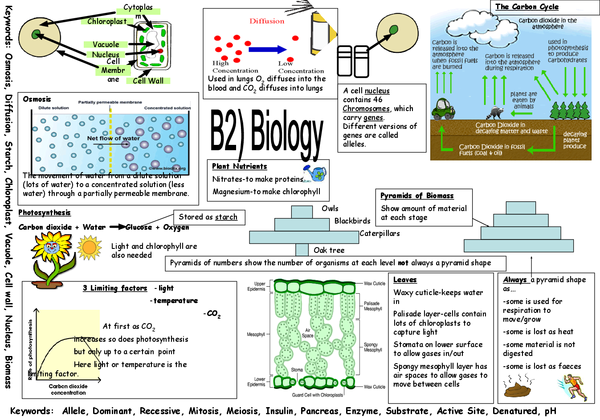 Preview of AQA B2 Biology Revision Poster