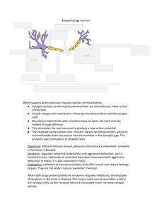Preview of AQA B Psychology Unit 1 Biopsychology revision - Neurones and synaptic transmission