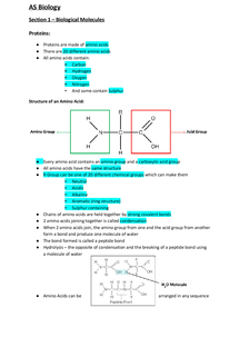 Preview of AQA Biology - Proteins (Excellent notes)