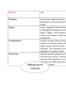 Preview of AQA Biology Unit 2 - Making Use Of Enzymes