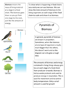 Preview of AQA Biology Unit 2 - Pyramids of Biomass
