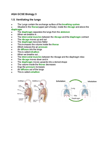 Preview of AQA GCSE B3: Ventilating the Lungs