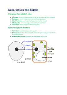 Preview of AQA GCSE (HIGHER) Biology Unit 2- Cells, Tissues and Organs