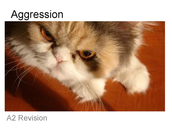 Preview of AQA Psychology- Aggression Revision.