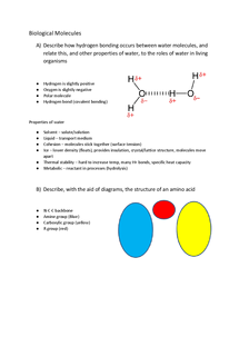 Preview of AS Biology OCR Biological Molecules Notes