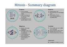 Preview of AS Biology OCR Unit 1 Module 1, OCR, AS, Biology, Cell exchange and Transport, Mitosis