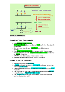Preview of AS BIOLOGY- Protein Synthesis