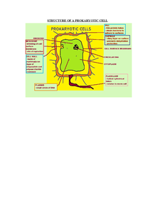 Preview of AS Biology- Structure of a Prokaryotic cell