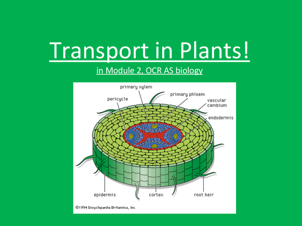 Preview of AS Biology; Transport in plants