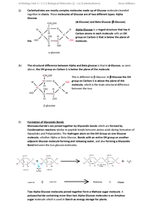 Preview of AS OCR Biology | F212 Module 1 - Carbohydrates (As part of Biological Molecules)