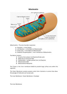 Preview of AS OCR Biology: Mitochondria