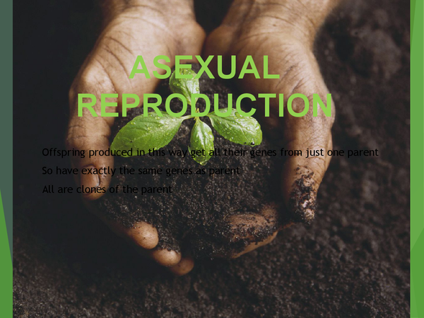 Preview of Asexual Reproduction ppt