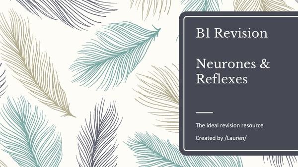 Preview of B1 - Neurones and Reflexes