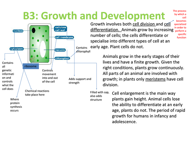 Preview of B3; Growth and Development