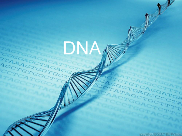 Preview of B3 biology :DNA