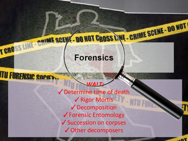 Preview of Bio Unit 4 - Forensics, Time of Death Presentation