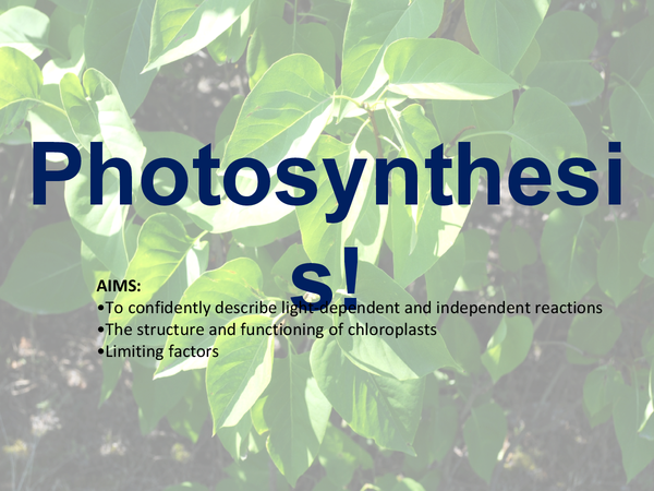 Preview of Bio Unit 4 - Photosynthesis Presentation