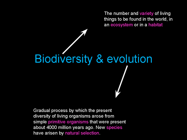 Preview of biodiversity & evolution
