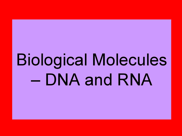 Preview of Biological Molecules - DNA and RNA