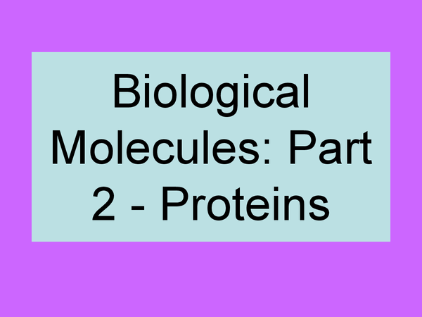 Preview of Biological Molecules - Proteins - AS OCR Biology