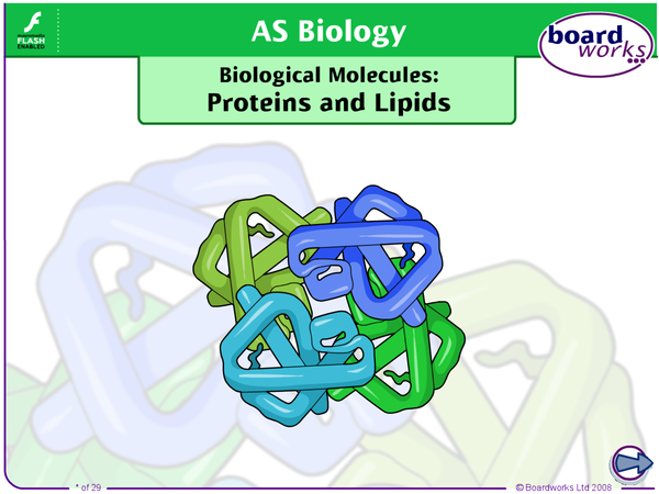 Preview of Biological Molecules Proteins Lipids