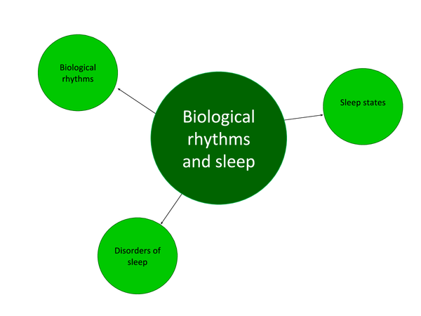 Preview of Biological Rhythms and Sleep