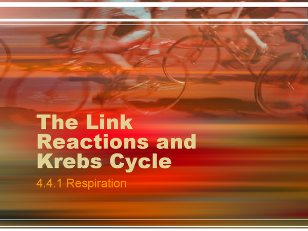 Preview of Biology A2 Link Reaction and Krebs Cycle