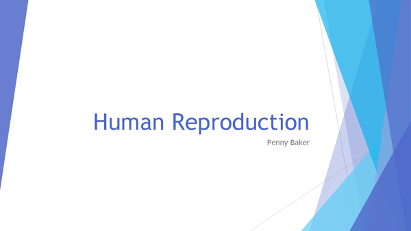 Preview of Biology A-Level; Human Reproduction Powerpoint