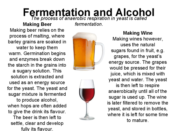 Preview of Biology - Alcohol and Fermentation (poster)