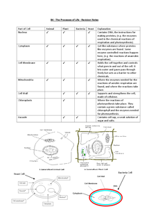 Preview of GCSE Biology - B4 The Processes of Life - Revision Notes