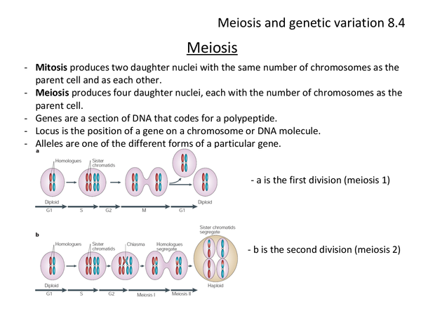 Preview of Biology genetic variation and meiosis unit 2