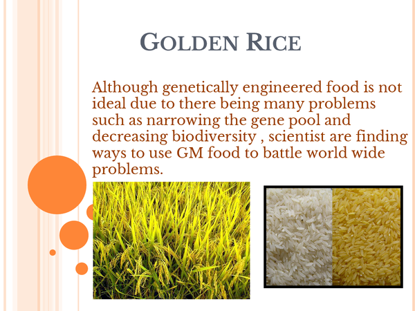 Preview of Biology OCR A2 - Golden rice presentation