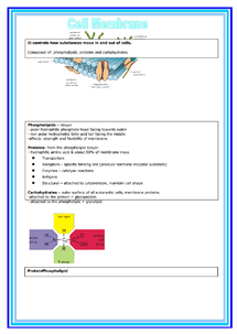 Preview of Biology unit 1 - Cell membrane summary