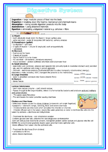 Preview of Biology unit 1 - digestive system summary sheet